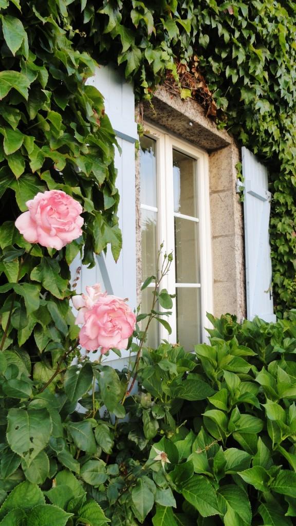 Fenêtre, lierre et roses