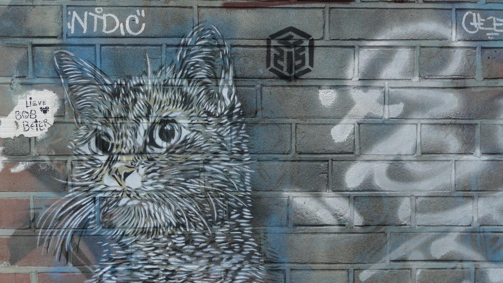 Amsterdam - Street art - Chat de C215