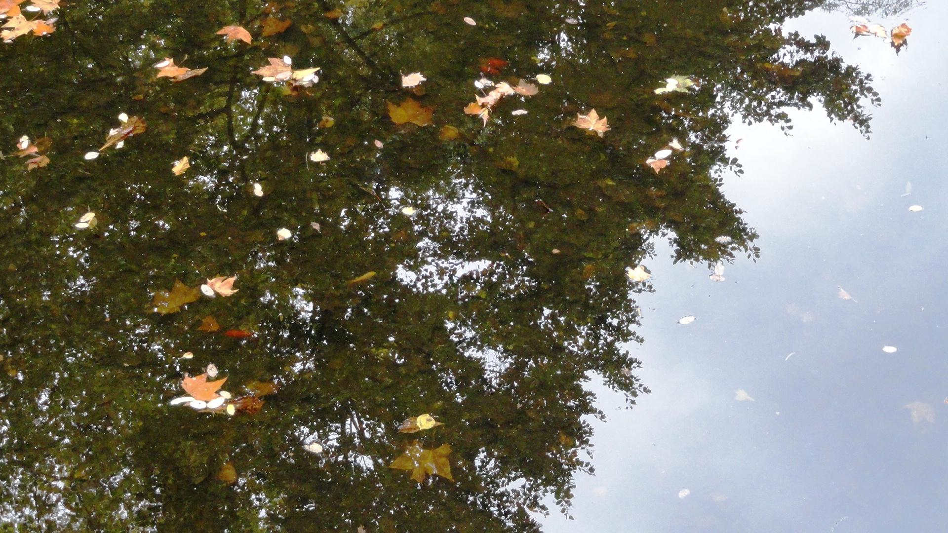 Jardins Albert Kahn - Jardin anglais- Reflet