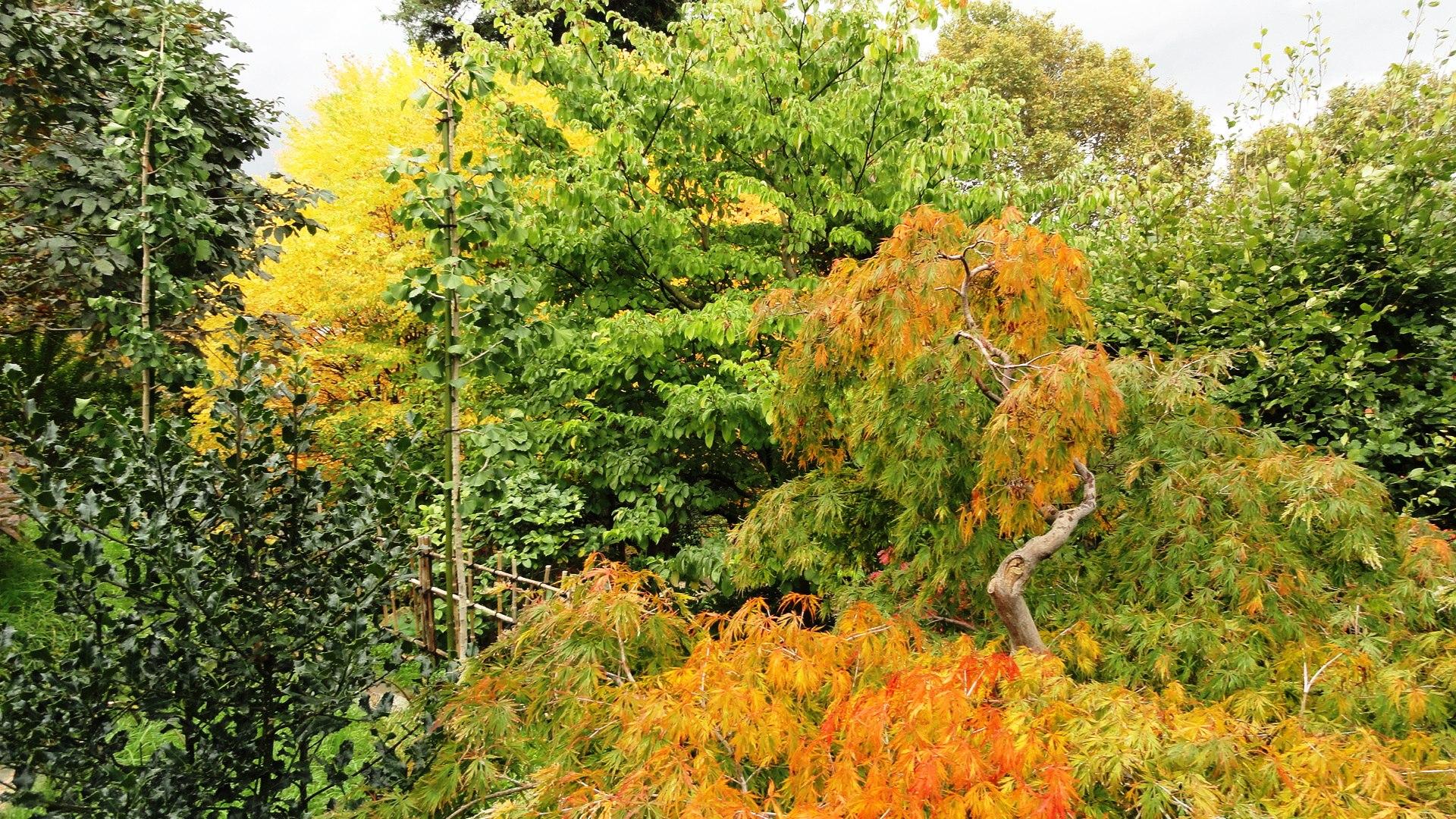 Jardins Albert Kahn - Les couleurs de l'automne