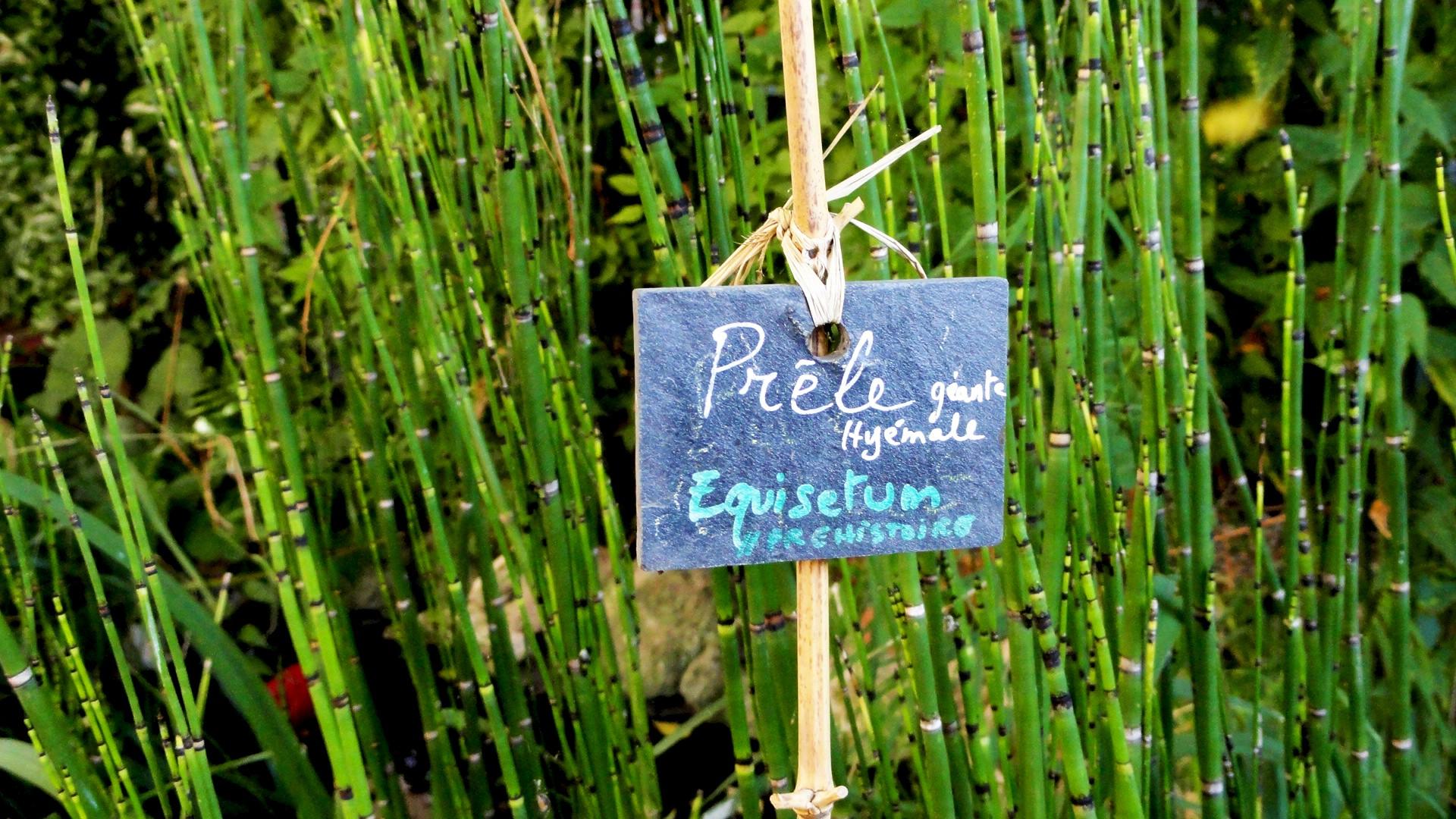 Jardin partagé Leroy Sème, Paris 20e