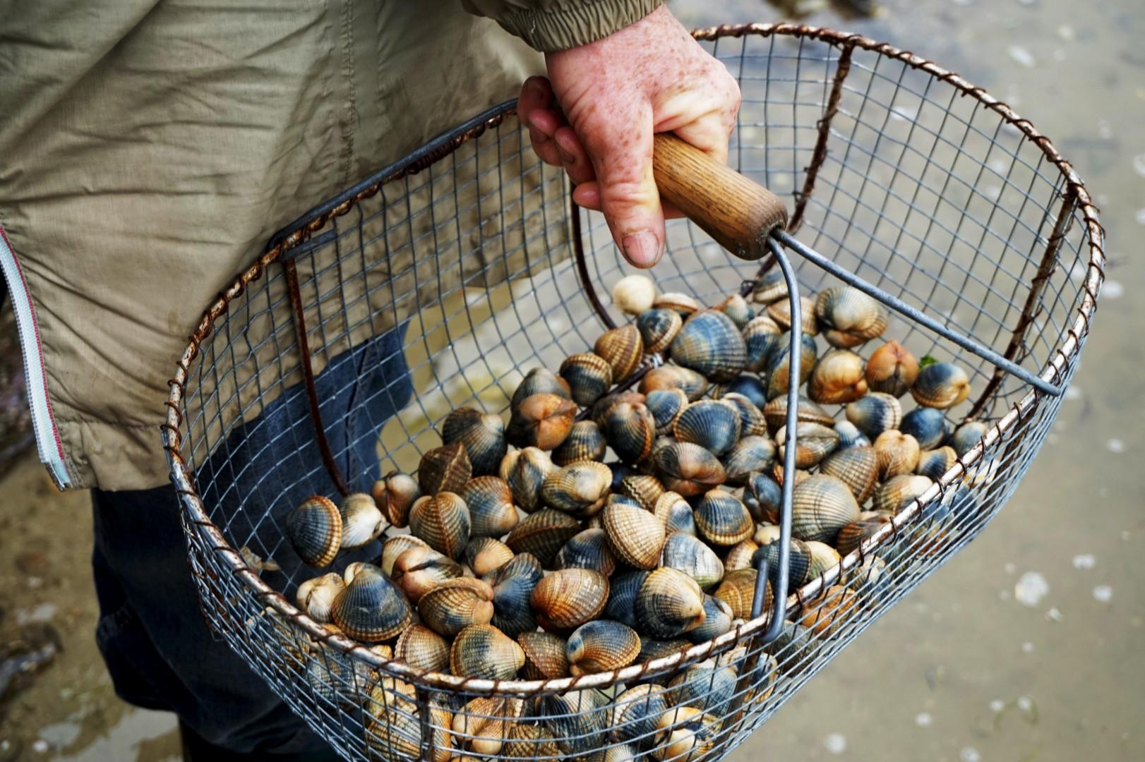Vacances dans le Finistère Sud - Pêche aux coques
