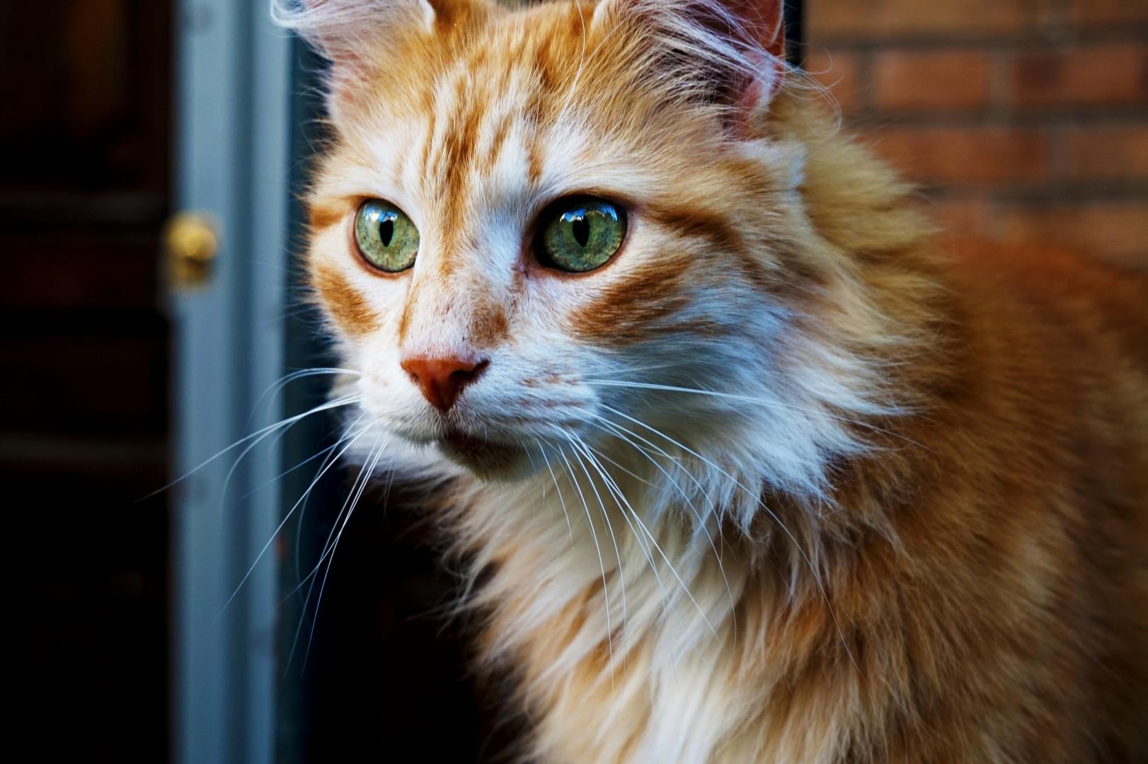 Le chat du square des Peupliers, Paris 13e