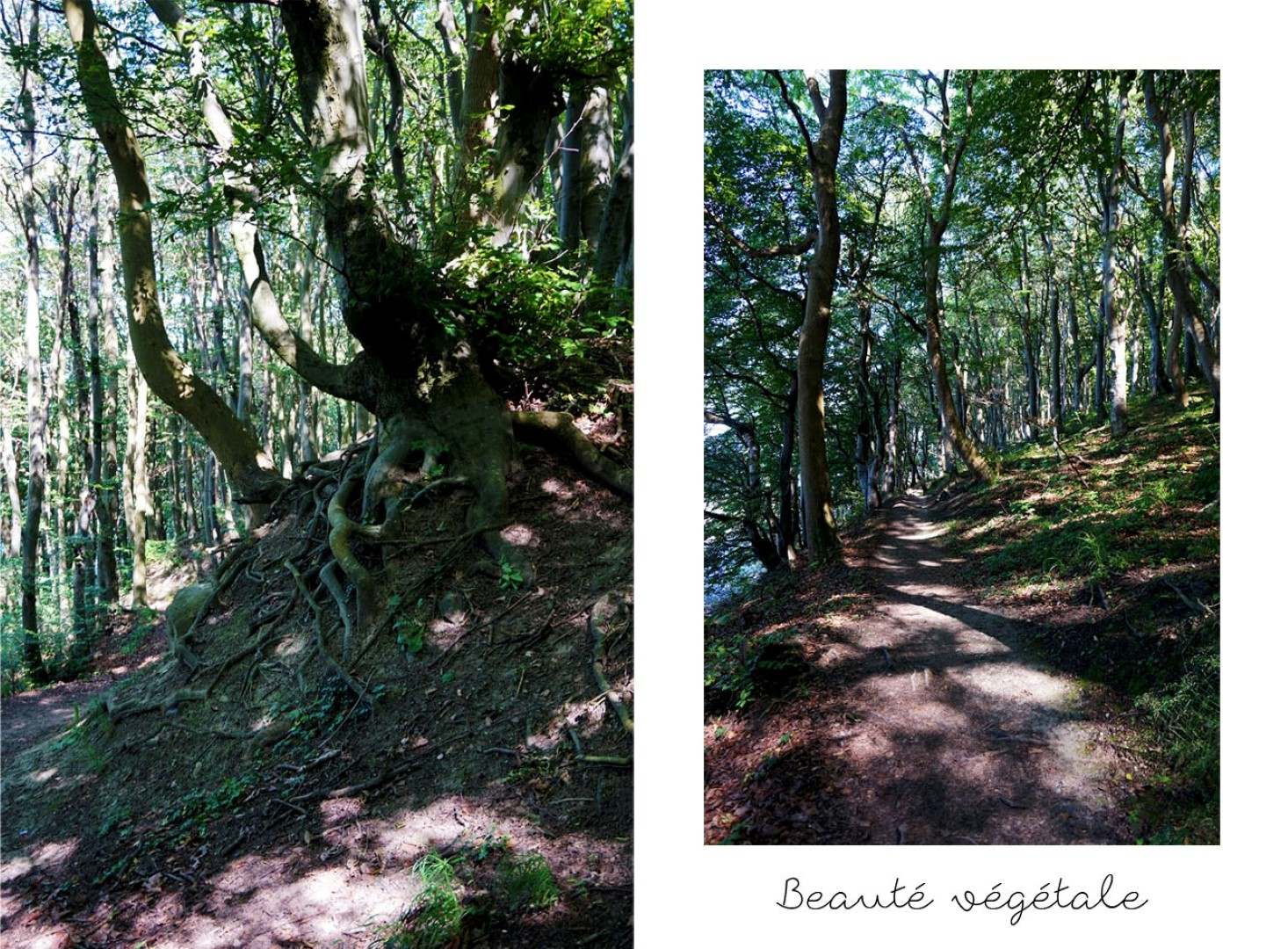 Randonnée dans le Parc National de Jasmund (Ile de Rügen) - Blog voyage