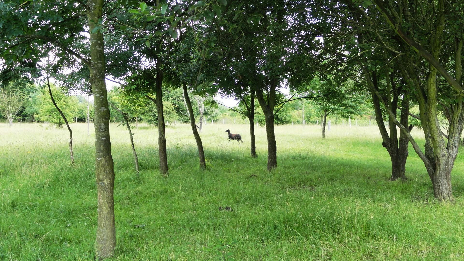 La Parc de la Haute Ile - Une brebis