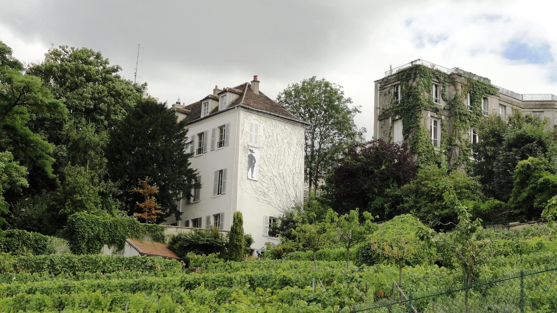 Le Clos Montmartre et ses vignes