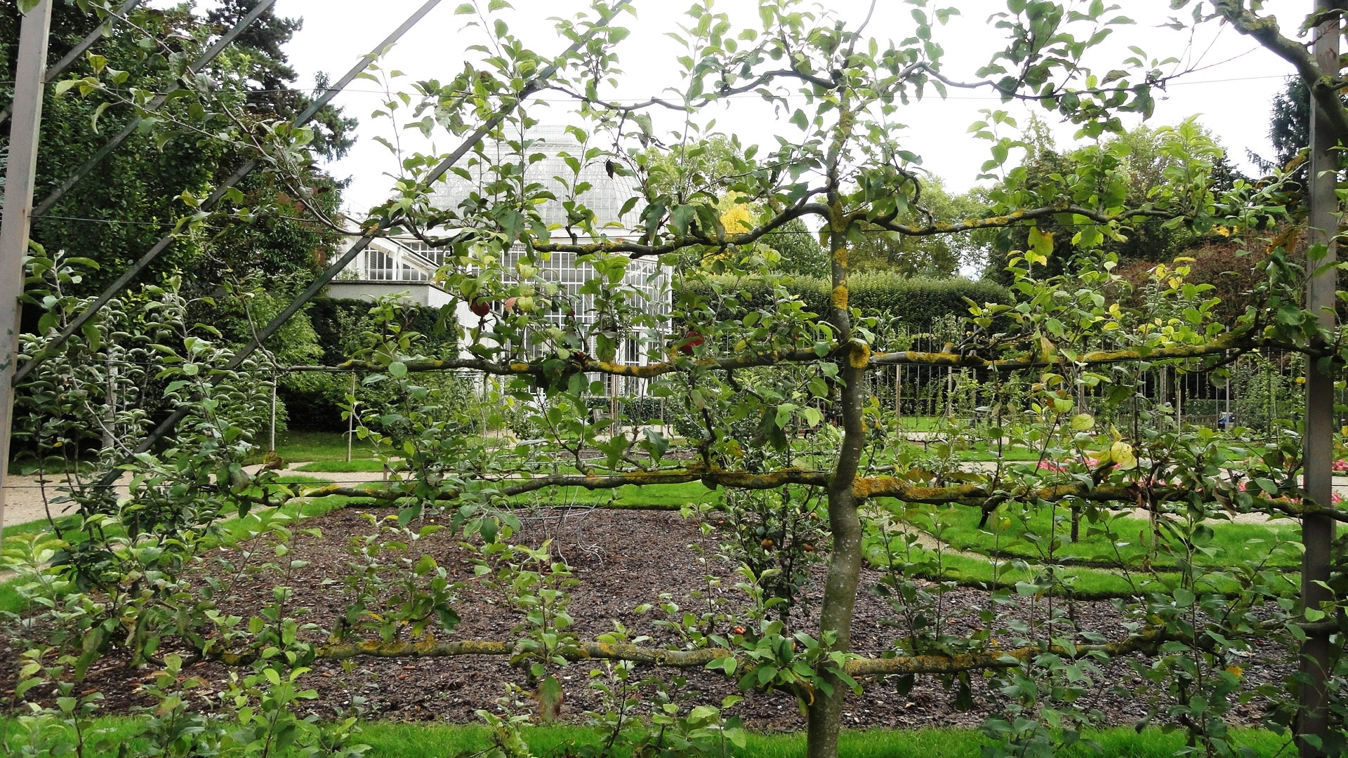 Jardins Albert Kahn - Verger et roseraie