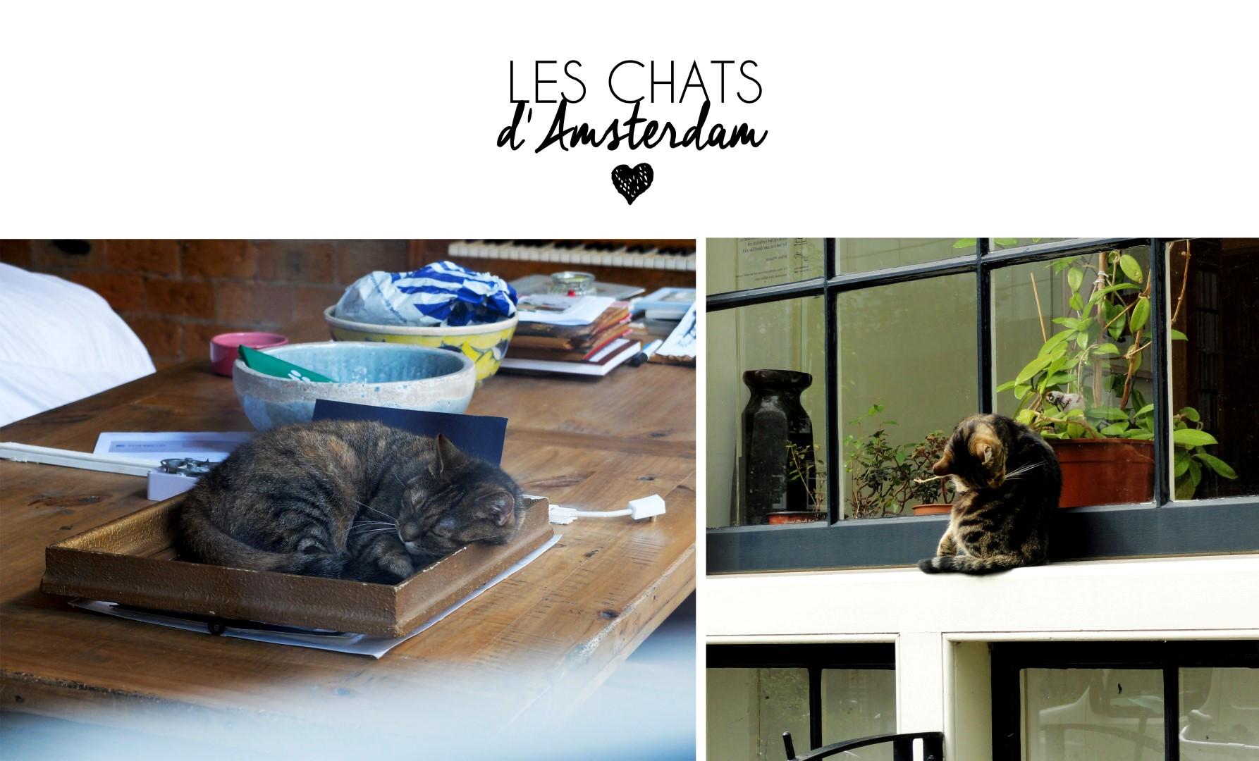 20160202_chats_amsterdam (Large)