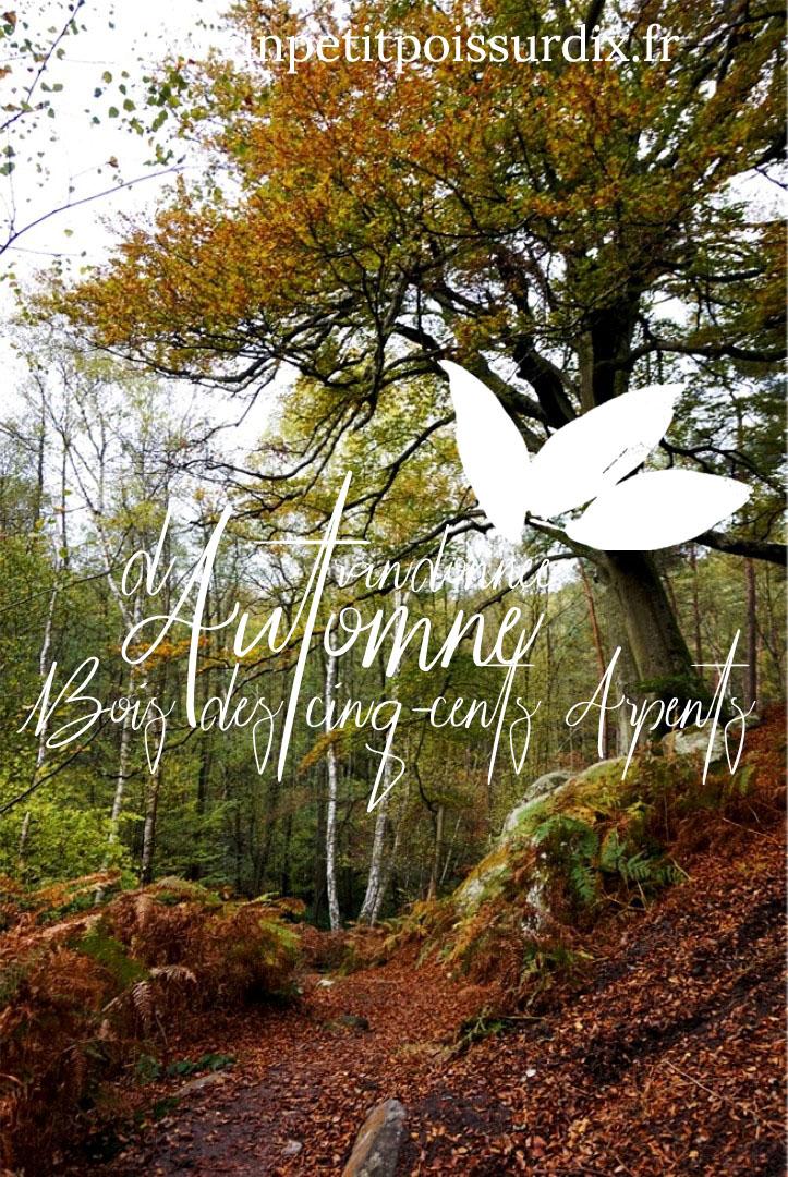 Randonnée d'automne - Bois des Cinq Cent Arpents - Rambouillet