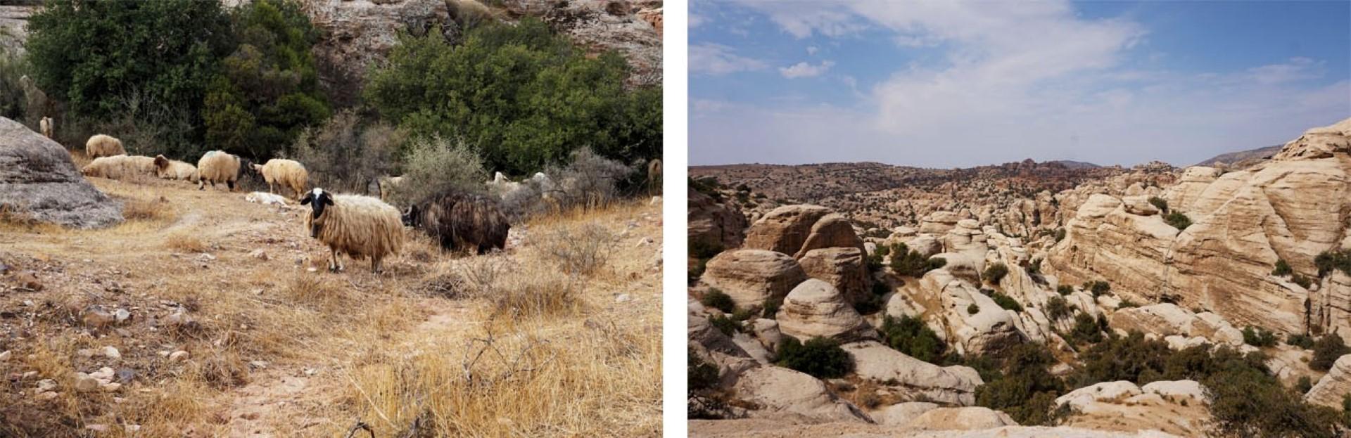 Voyage en Jordanie - Petra Wadi-Rum - Réserve naturelle de Dana