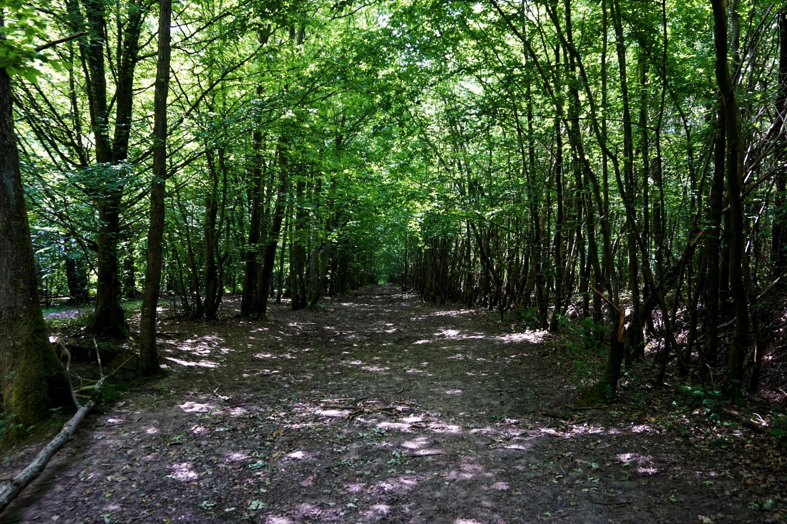 Balade en Forêt de Rambouillet