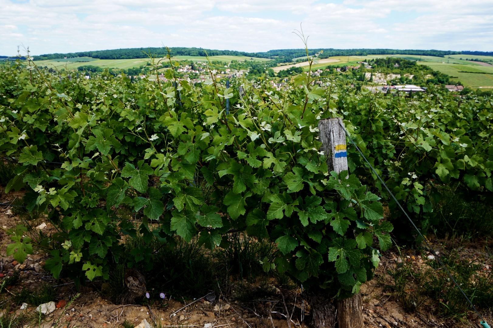 Randonnée dans les vignes de Champagne - Seine et Marne