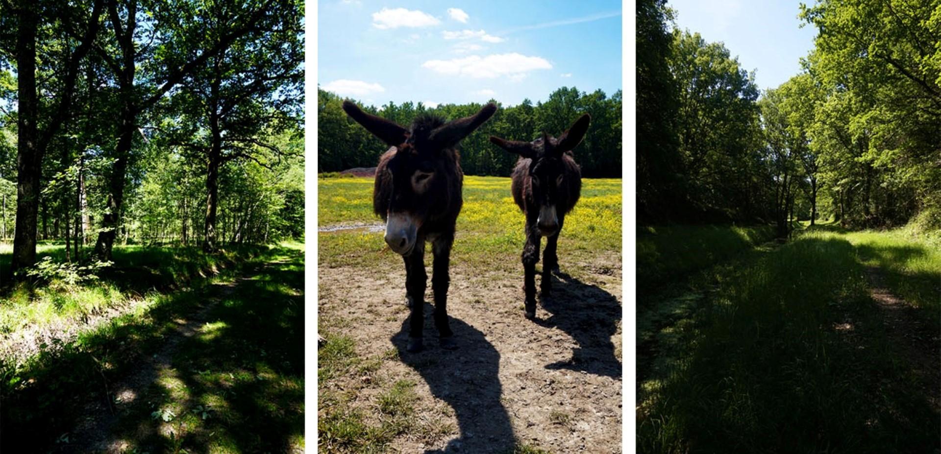 Randonnée en Forêt de Rambouillet - Etang de la Tour et Etangs de Hollande
